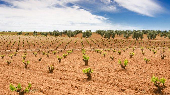 UPA-UCE y Apag Extremadura Asaja plantean a Vara medidas de apoyo al viñedo