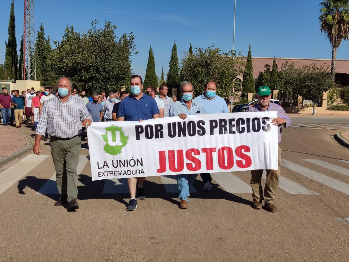 La Unión pide a las administraciones que medien por el precio de la aceituna de verdeo